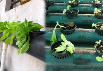 farming-without-soil